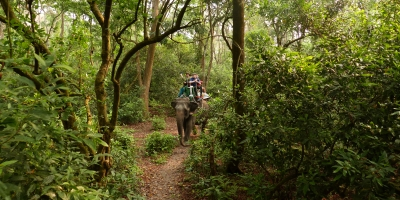 Chitwan Jungle Safari 3 Night 4 Days