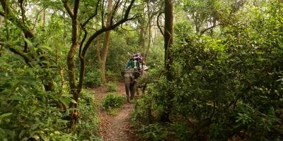 Chitwan Jungle Safari 3 Night 4 Days